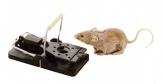 SNAP-E Mouse trap 6-pack